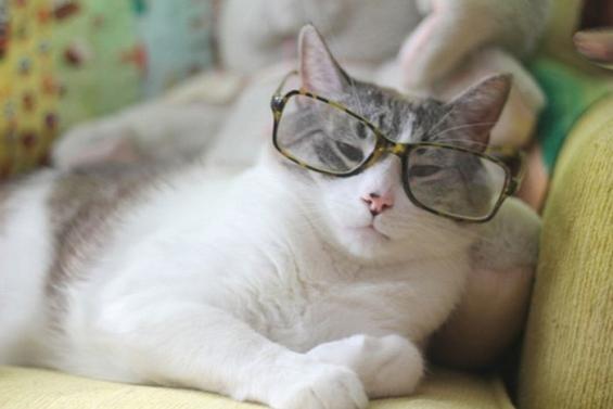 ネコジマン がり勉風 猫画像,猫写真の投稿サイト